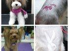 Фотография в Собаки и щенки Стрижка собак Стрижки собак: гигиенические, модельные, в Красноярске 0