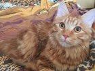 Смотреть фотографию Потерянные Найден кот бобтейл в Красноярске 34062614 в Красноярске