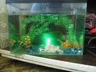 Изображение в Рыбки (Аквариумистика) Купить аквариум продам аквариум на 100 литров+золотая рыбка+подача в Красноярске 4000