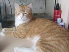 Изображение в Потерянные и Найденные Потерянные Потерялся кот 08. 07. 2016 в районе ул. 9 в Красноярске 0