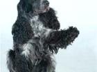 Новое foto Потерянные Пропала собака! 37699965 в Красноярске