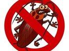 Скачать foto  Уничтожения клопов тараканов муравьев 40035224 в Красноярске