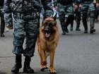 Скачать бесплатно фотографию  дрессировка собак различных пород 49779165 в Красноярске