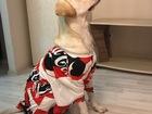 Просмотреть foto Вязка собак Лабрадор 2 года ищет даму 68356958 в Красноярске
