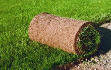 Посев газона, Укладка рулонного газона