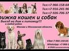 Смотреть изображение  Стрижка кошек и собак Выезд на дом в любой район Москвы и Московской области 37057769 в Москве