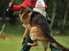 Увидеть foto  Дрессировка собак Видное Домодедово Подольск 37417141 в Москве