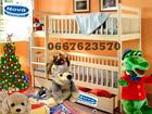 Скачать бесплатно изображение  Двухъярусная кровать «Карина Люкс»: новое поколение признанного лидера 37808389 в Кургане