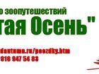 Изображение в   Поездки на выставки собак по России и заграницу. в Москве 1000