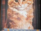 Изображение в   Продам книгу Дьюи. Кот из библиотеки, который в Махачкале 100