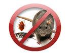 Скачать фото  Уничтожение клопов тараканов всех насекомых грызунов и паразитов в Москве 39330773 в Москве