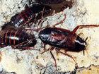 Смотреть foto  Выведение (травля) насекомых, Дезинсекция муравьев, тараканов, блох, постельных клопов, 40038553 в Москве