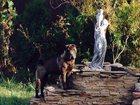 Просмотреть фотографию Продажа собак, щенков Щенки Шарпей 32414002 в Курске