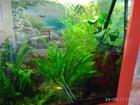 Просмотреть foto Растения Аквариумные растения из домашнего аквариума в Орехово-Зуево 40114812 в Орехово-Зуево