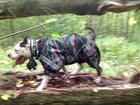 Фотография в Домашние животные Услуги для животных ИЗГОТАВЛИВАЮ ПО ИНДИВИДУАЛЬНЫМ РАЗМЕРАМ. в Липецке 0