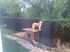 Смотреть изображение Вязка собак Кобель Хаски для вязки 38438987 в Липецке