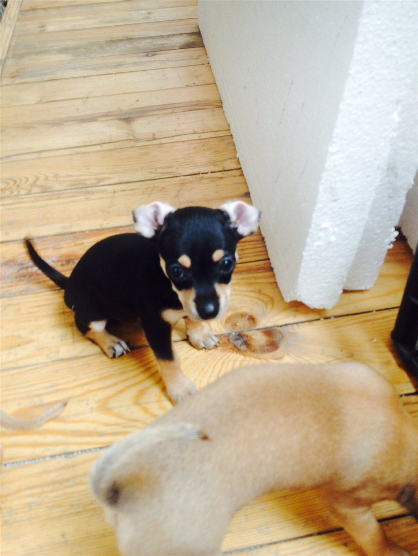 Купить щенка в Магнитогорске недорого: продажа