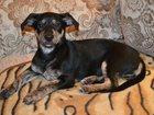Уникальное фотографию Потерянные Пропала собака 32413299 в Магнитогорске