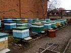 Пчеловодам продаю готовые новые улики