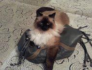 Потерялась кошка 10. 07. 2015 на карнизе 2-го этажа дома по ул. Рубинштейна (рай