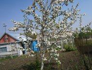Продам сад Строитель1 сад№2 (в сторону озера Соленое) Сад ухоженный. Есть дом, б