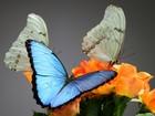 Просмотреть фото Организация праздников Живые тропические бабочки на ваш праздник 33888887 в Махачкале