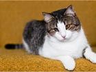 Свежее фото Отдам даром - приму в дар Шанхай-прекрасная кошка в дар! 32477293 в Минске