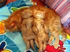 Изображение в Кошки и котята Продажа кошек и котят В связи с переездом отдам дешево британских в Минске 0