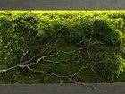 Фото в   Стабилизированный мох, мох в интерьере, панно в Минске 0