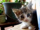 Фотки Домашняя кошка смотреть в Минске