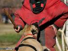 Изображение в Домашние животные Разное Дрессировка собак Бутово  КИНОЛОГИЧЕСКИЙ в Москве 500
