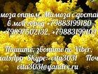 Фотография в Рыбки (Аквариумистика) Растения Мимоза ОПТОМ. Тюльпан. Нарцисс. Цветы  На в Москве 150