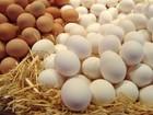 Фото в Услуги компаний и частных лиц Разные услуги ООО ТехноСерв реализует куриное яйца и в Москве 38