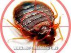 Фотография в Услуги компаний и частных лиц Разные услуги Уничтожение тараканов, клопов, муравьёв, в Москве 1500