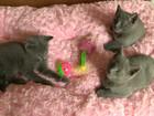 Уникальное фото Разное Русские голубые котята в новый дом в новую семью 35139589 в Москве