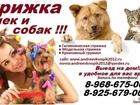 Изображение в Собаки и щенки Стрижка собак Предлагаем к вашему Вниманию! свои услуги в Москве 100