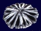 Увидеть foto Женская одежда Шкурки шиншиллы европейского качества 37928791 в Москве