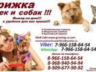 Скачать фото Разные услуги Стрижка кошек и собак вызов вызов на дом груминг животных 38733050 в Москве