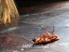 Уникальное фото Разные услуги Дезинфекция озоном квартиры, коттеджа, офиса, после травли насекомых, 38909203 в Москве