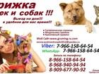 Новое изображение Другие животные Стрижка кошек и собак, Выезд на дом,Стрижка животных выезд в любой район Москва и Московская Область 39137747 в Москве