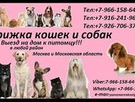 Стрижка кошек и собак Стрижка кошек и собак! Предлагаем к вашему Вниманию свои у