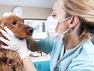 Ветеринарная помощь 24 Круглосуточная Ветеринарная Помощь на дому!   Выезд на до