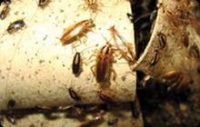 Дезинфекция от тараканов, Борьба с тараканами в помещениях