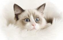 Убрать запах кошачьей мочи в квартире