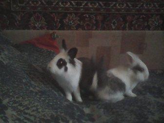 Смотреть фотографию  Декоративные кролики 34018902 в Москве