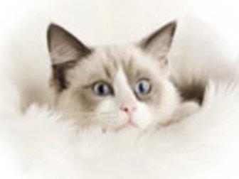 Смотреть фото Другие животные Как убрать запах кошачьей мочи в квартире, Как избавиться от кошачьего запаха, 38618197 в Москве