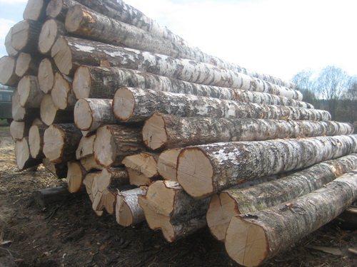 Картинки по запросу лес кругляк береза