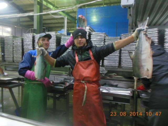работа в артёме рыбообрабочиком Вуйма, производятся