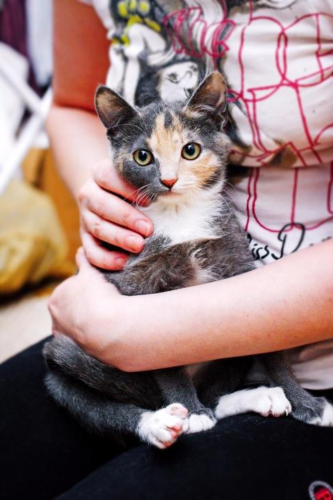 Доски объявления купить котенка