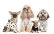 Фирма Urban dogs динамично развивающееся